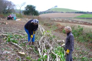 Hedgelaying Stoke Abbott