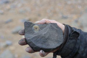 ammonite charmouth beach