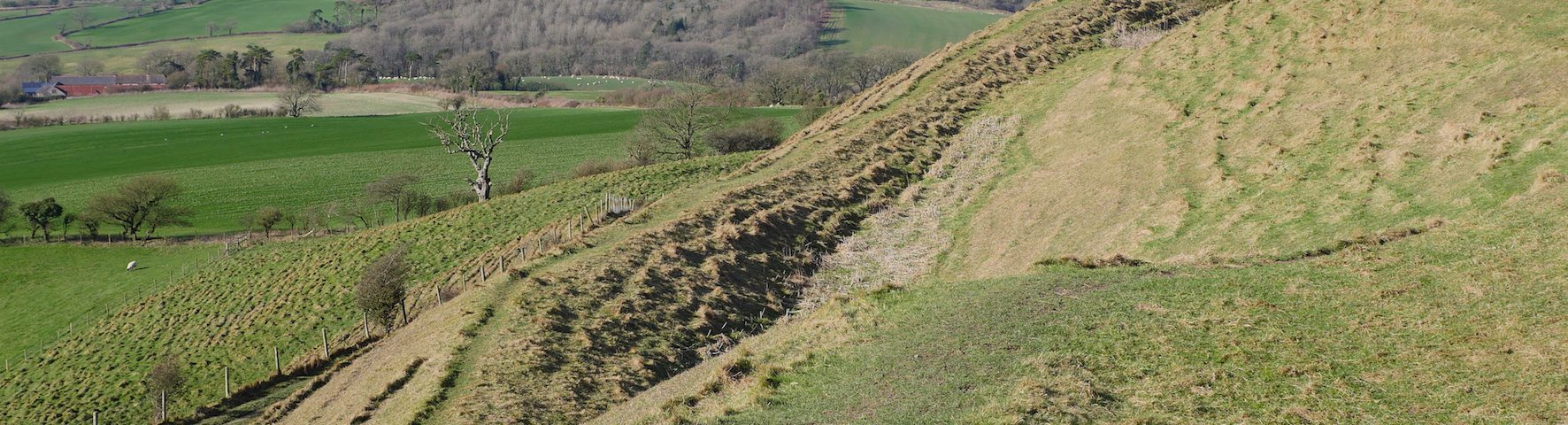 Eggardon Hill Dorset walks