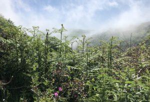 Culbone mist
