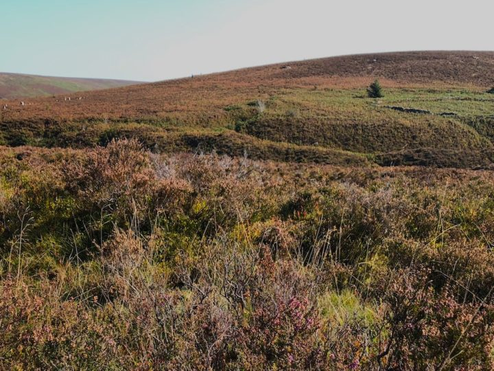 Deep in the bones of the moor at Chaw Gully