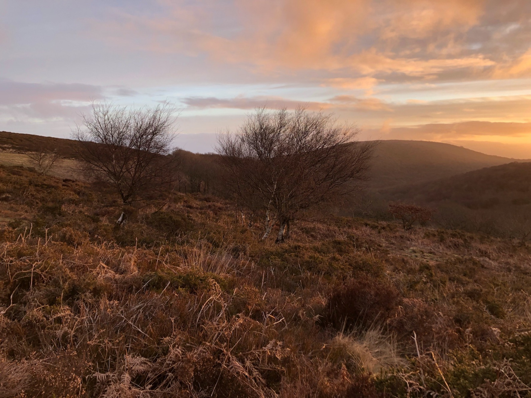On the Quantocks at dawn for the deer count