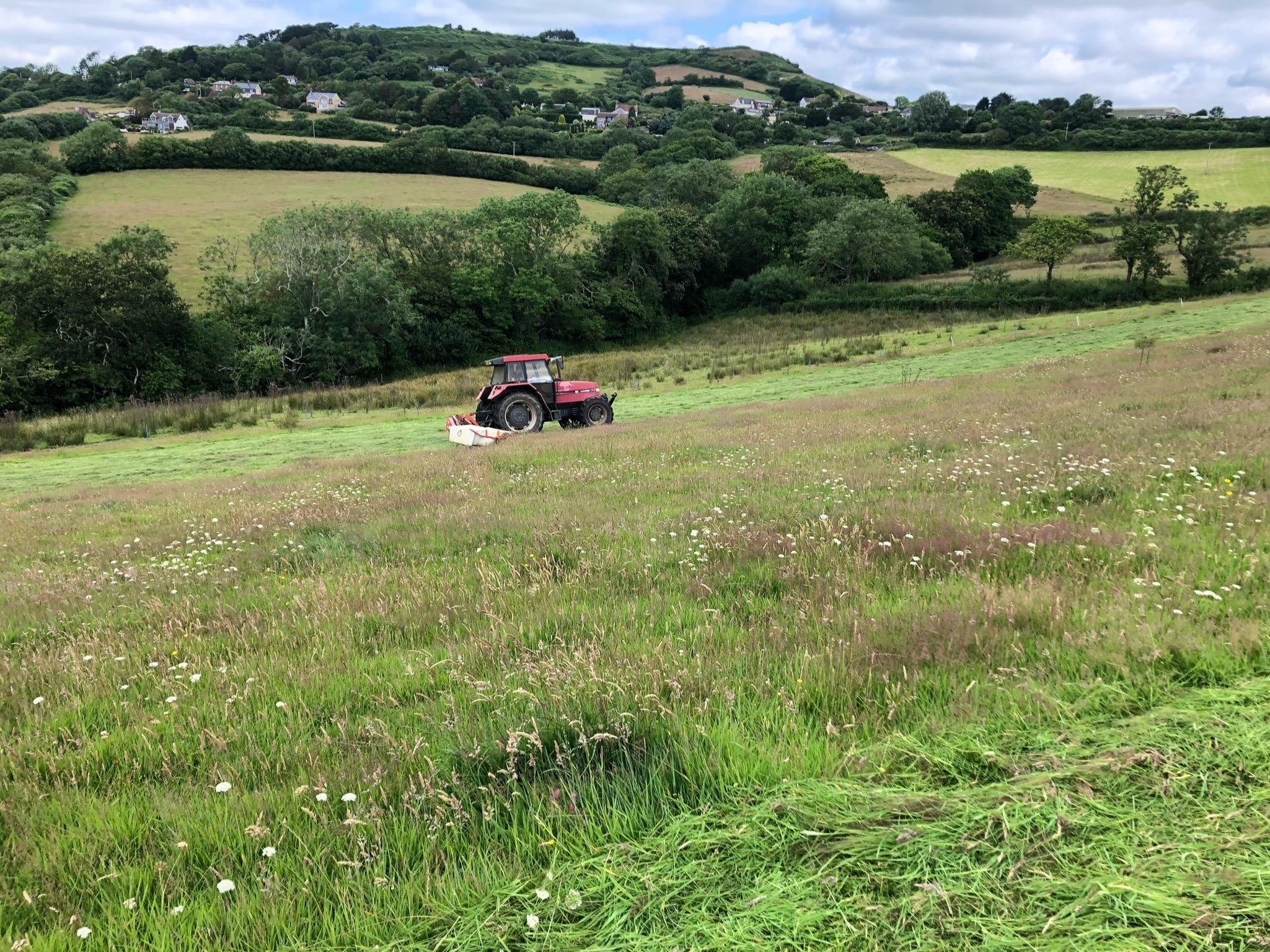 Hay, hay, hay! Haymaking time