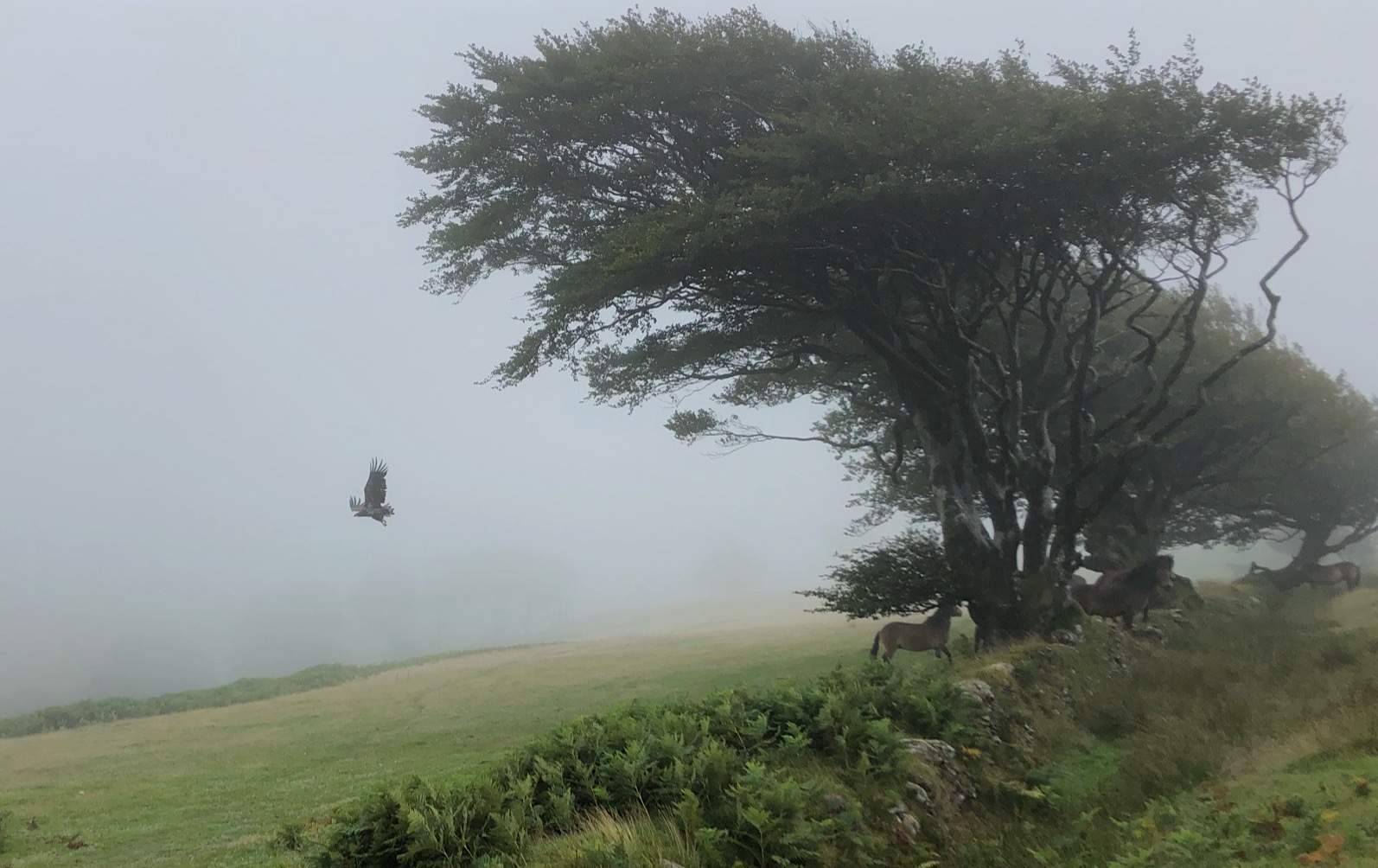 The day a white-tailed eagle appeared out of the mist